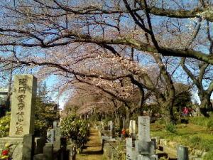 0404染井霊園