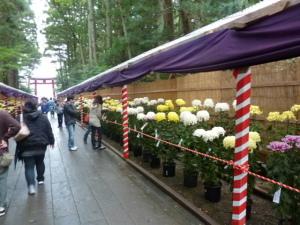 1101菊祭り