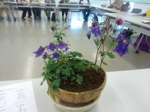 0507おだまきの花