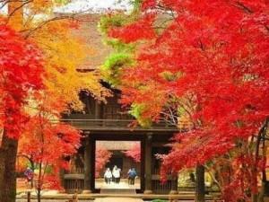 1019平林寺の紅葉