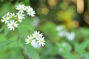 1103高尾山の花