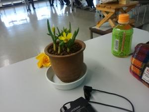 0304水仙の花