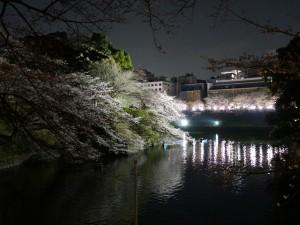 0402夜桜