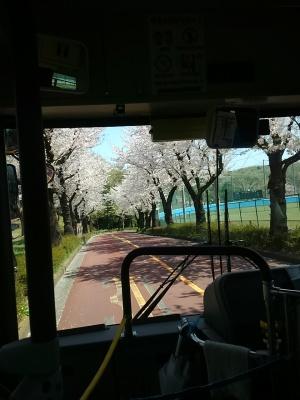 0414桜の美しい林