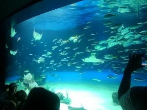 0815サンシャイン水族館