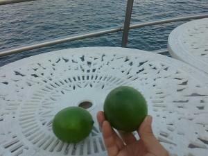 20170927母島レモン