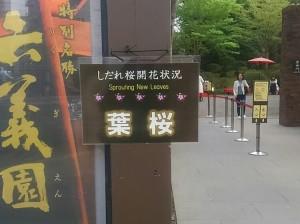 20180405葉桜