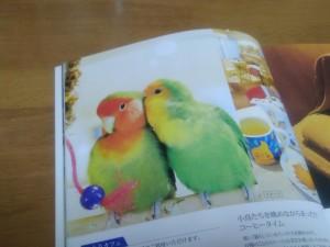20180418小鳥カフェ