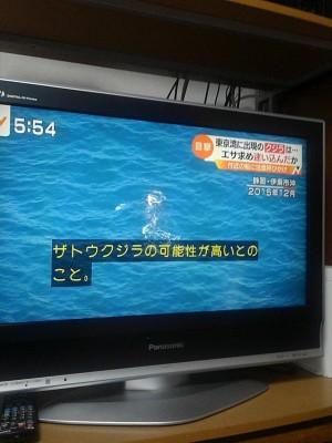 20180625ザトウクジラ