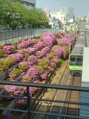 20200427駒込駅
