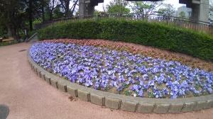 20200504花壇
