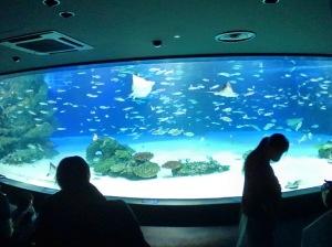 20200828水族館